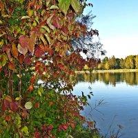 Ах, Осень! Как можно её не любить! :: Galina Dzubina