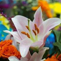 Хорошо в магазине: тепло и уют,а цветы на витринах покупателей ждут... :: Александр Попов