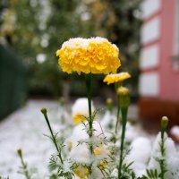 """""""Во дворе у дома замерзаю я.Отогрейте,люди,вы скорей меня..."""" :: Александр Попов"""