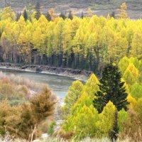 Осень в Туве :: Ольга Иргит