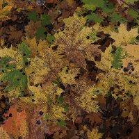 Ковер из желтых листьев :: Наталья Лунева