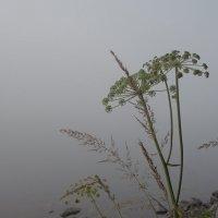 Икебана с туманом по Карельский ... :: Александр Буланов