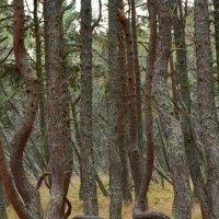 Танцующий лес :: Анастасия Смирнова