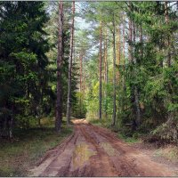 По лесной дороге. :: Роланд Дубровский