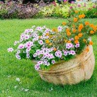 Горшочек с цветами :: Stanislav Gvozdin