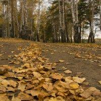 Золотая осень. :: Владимир Терехов