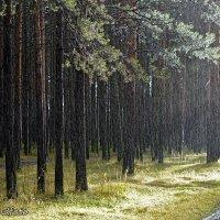 Дождь :: Виктор Бондаренко