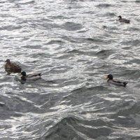 Плещут холодные волны :: Андрей Лукьянов
