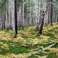 Грибной лес :: Александр Попов