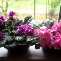 В моем доме весна,  а за окошком осень :: Елена Семигина