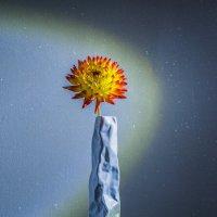 Цветок... :: juriy luskin