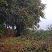 Осенний лес :: Борис Русаков