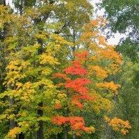Осень :: Ольга Романова