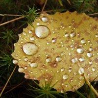Осенний лист... :: Ирина Румянцева