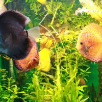 аквариум :: Татьяна Гузева