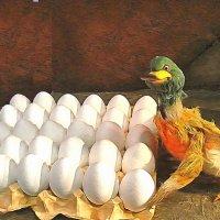 Яйца кладут на удачу. :: Галина