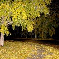 Осень листья раскидала... :: Наталья Юрова