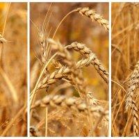 созрел урожай :: Владимир