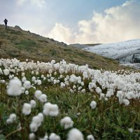Цветы во льдах :: Tatiana Belyatskaya