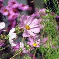 Цветы октября :: Елена