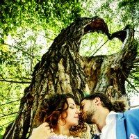 Tree heart :: Tatiana Koludarova Koludarova