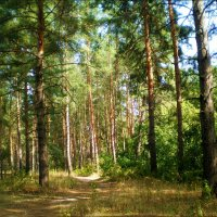 Прогулка по лесу :: Татьяна Пальчикова