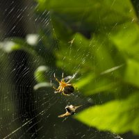 паук :: JulO Юлия