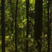Спектр зеленого шума. :: Евгений Ярдов