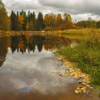 Осень золотая. :: Марина Шубина