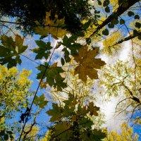А небо осенью, синее с проседью... :: Александр Артюхов