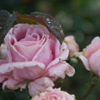 Куда бы спрятаться от дождя :: Светлана