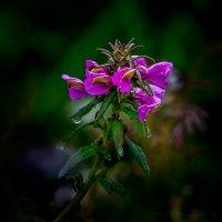 Просто цветок. :: Юрий Харченко