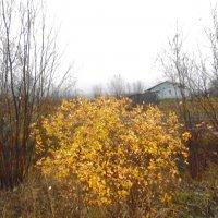 Яркий куст в дождливое октябрьское утро :: Николай Туркин