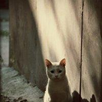 кот :: Inna Прибушаускайте