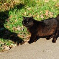 кошмары черной кошки :: linnud