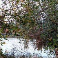 Осень у реки... :: Тамара (st.tamara)