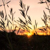 В последних лучах солнца :: Анастасия Смолина