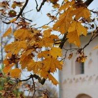 осень :: Наталия Рискина