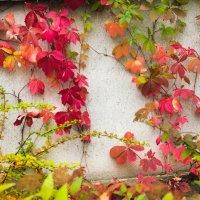 Краски осени :: Виталий