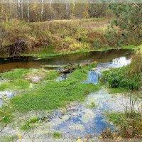 На берегах реки Серёжа (3). :: Николай Масляев