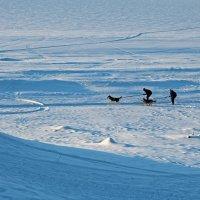 Разные дни у Белого моря. Зима :: Владимир Шибинский