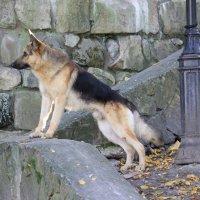 Собака - 13. :: Руслан Грицунь