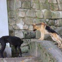 Собака - 11. :: Руслан Грицунь