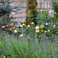 Осенние розы :: Miola