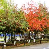 Осень в городе :: раиса Орловская