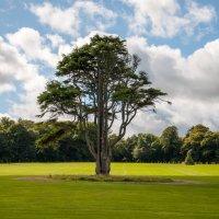 Магическое дерево :: Asinka Photography