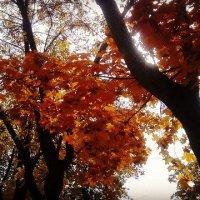 Осень :: Ирина Морозова