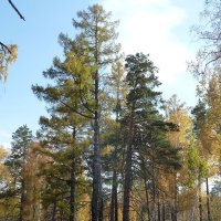 Осень в лесу :: Галина