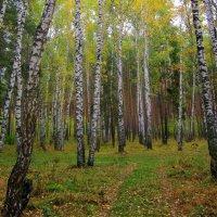 Лесными тропами. :: Мила Бовкун