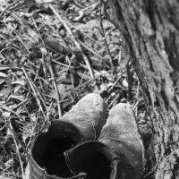 В лесу боти нки :: Yana Kern